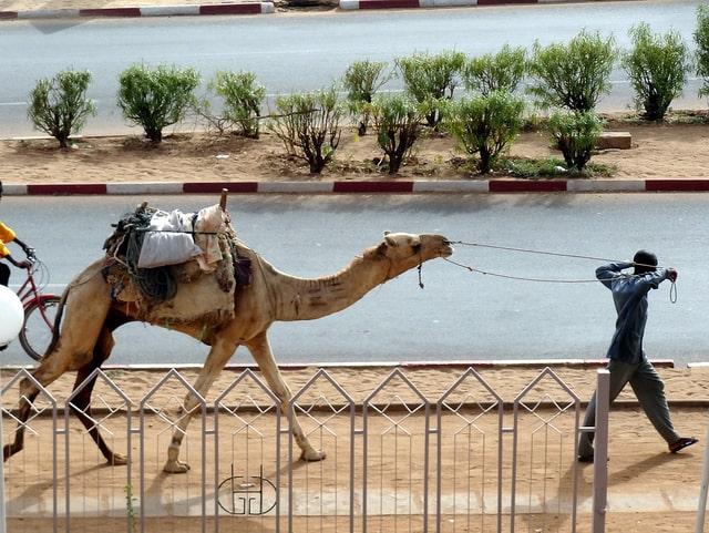 Fin de mission au Niger